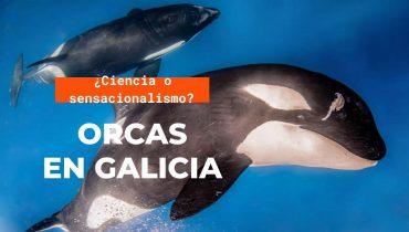 ORCAS EN GALICIA, ¿ATAQUES O INTERACCIONES?